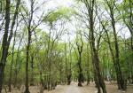 پارک جنگلی آهنگران خان ببین