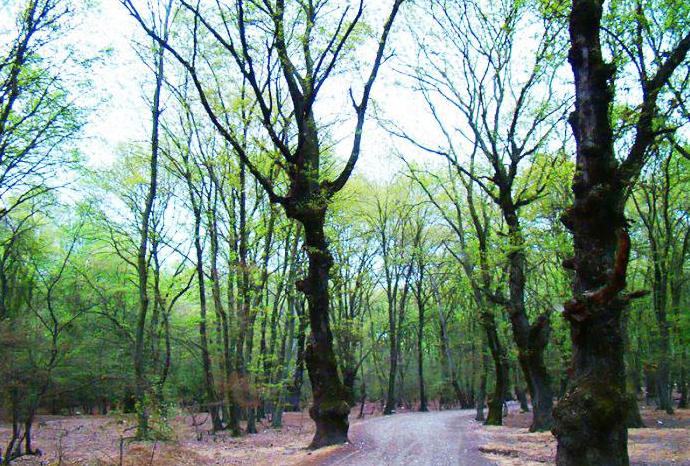 پارک جنگلی آهنگران