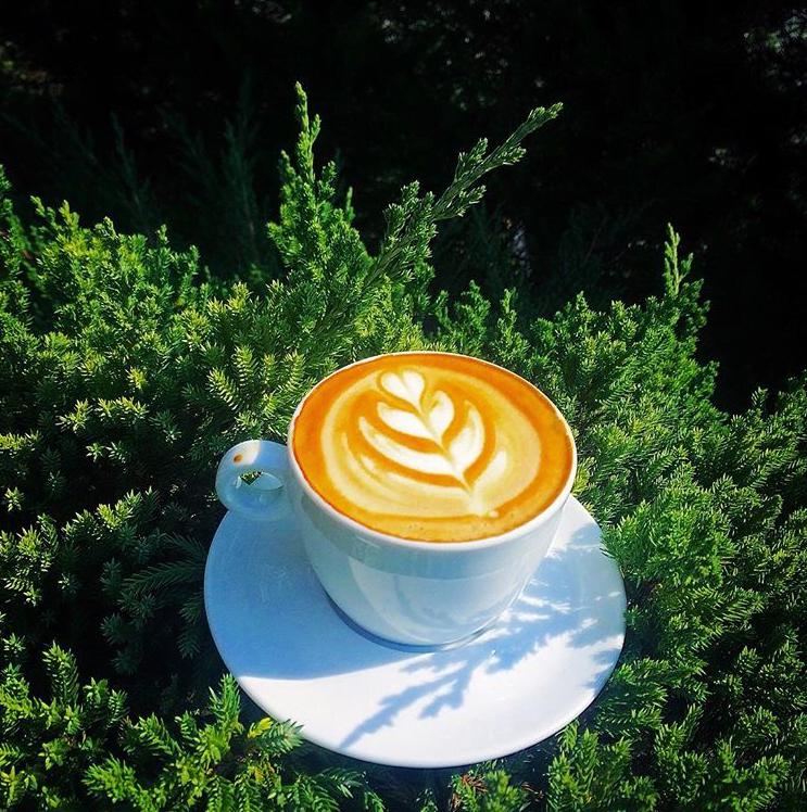 کافه آرمو کافه آرمو فریدونکنار