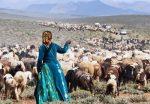 روایتی از زندگی عشایری در دنیای مُدرن امروز برای گردشگران داخلی و خارجی