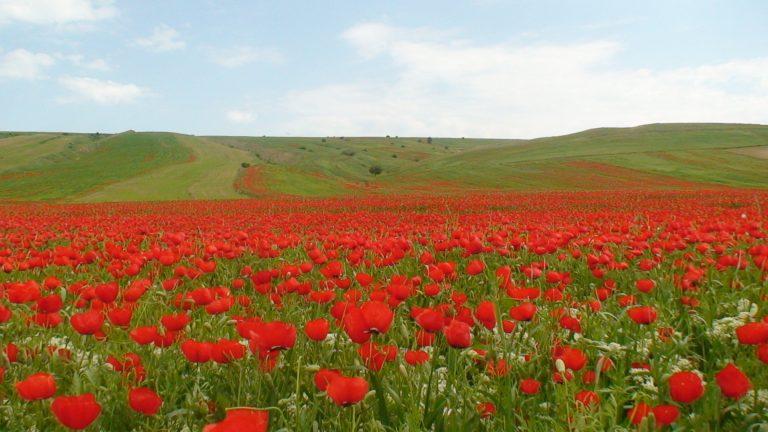 جاهای دیدنی شیراز در بهار