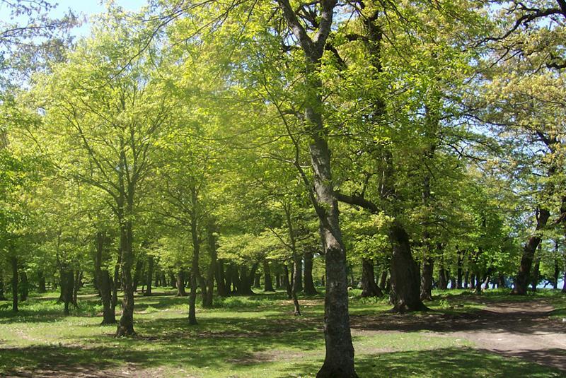 پارک جنگلی سوکان