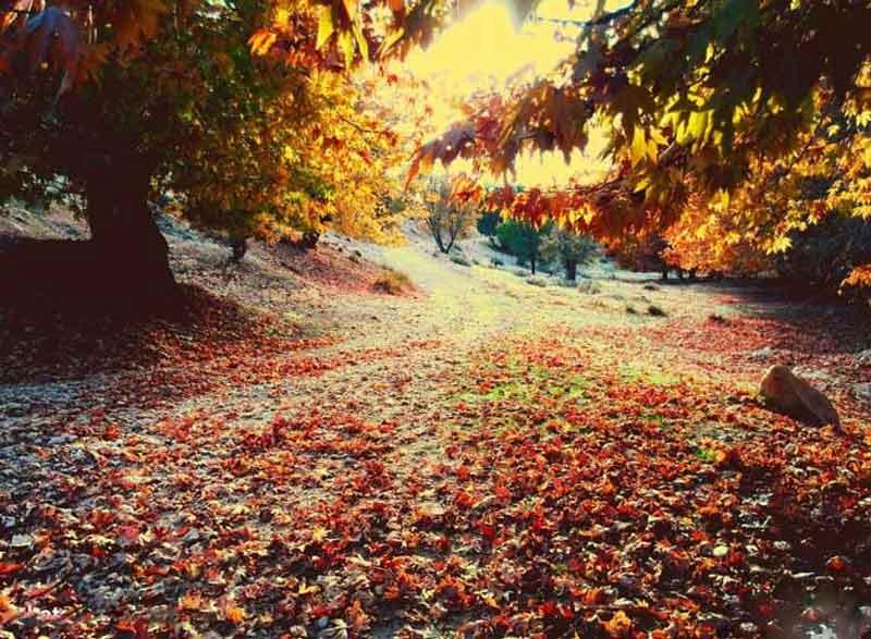 جاهای دیدنی یاسوج در پاییز