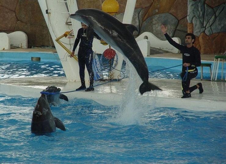 دلفین جاهای دیدنی کیش در پاییز