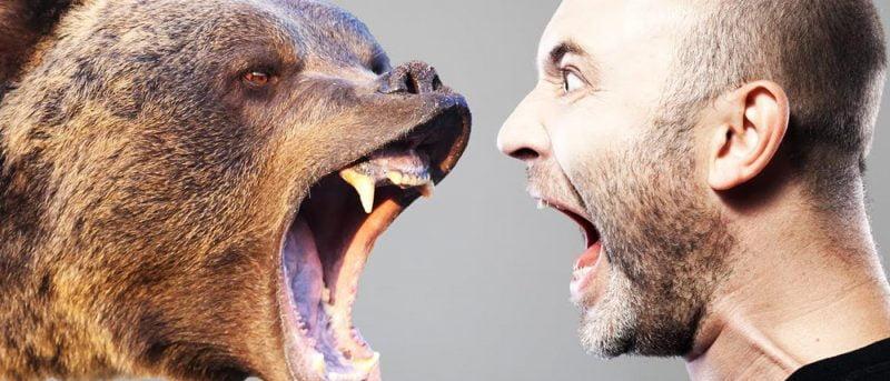 خرس - راهنمای کاربردی کمپینگ ( حیوانات وحشی )