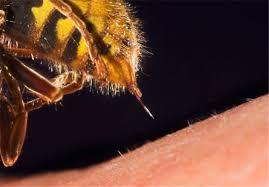 زنبور گزیدگی - راهنمای کاربردی کمپینگ ( حشرات )