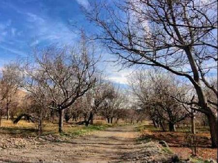 علی آباد - جاهای دیدنی یزد در پاییز