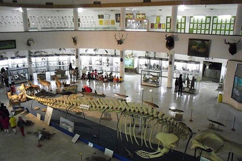 موزه تاریخی طبیعی - جاهای دیدنی اردبیل در پاییز