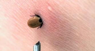 راهنمای کاربردی کمپینگ ( حشرات )