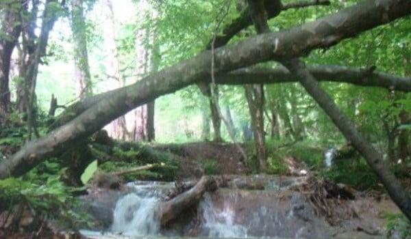 آبشار لاشو