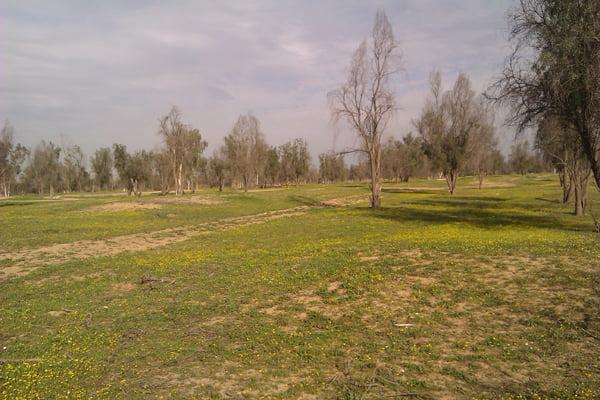 پارک جنگلی روستای چاه خانی بوشهر