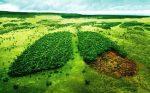 محیط زیست را دار نزنیم