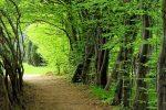 جنگلهای هیرکانی در انتظار ثبت میراث جهانی یونسکو