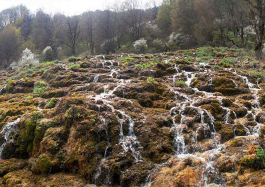 جنگل ارفع ده و چشمه پراو