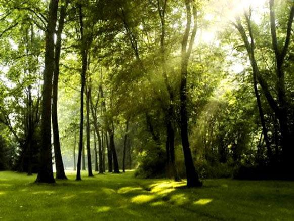 رویشگاههای جنگلی ایران