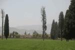 روستای بیدزرد