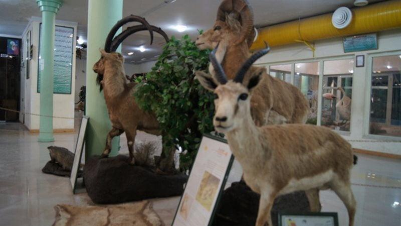 موزه حیات وحش اردبیل