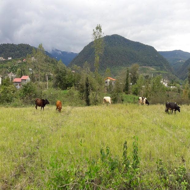چلاسر و جل دو روستای زیبای ایران