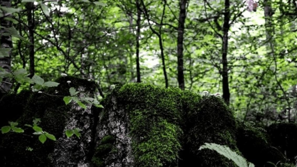 آبشار لاويج نور