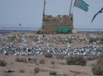 جزیره قبر ناخدا بوشهر