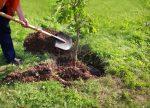 آیین درختکاری