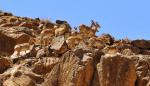 منطقه شکار ممنوع بهاباد
