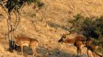 پارک ملی دز میانرود