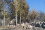 چشمه آقبلاغ اسکو