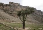 منطقه شکار ممنوع انجرک رابر