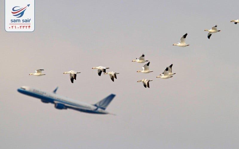 30 نکته خواندنی از هواپیماها و پرواز خارجی و داخلی