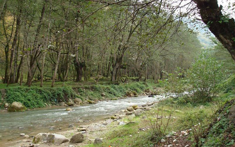 جنگل خانیکان یا جنگل نیرنگ نوشهر