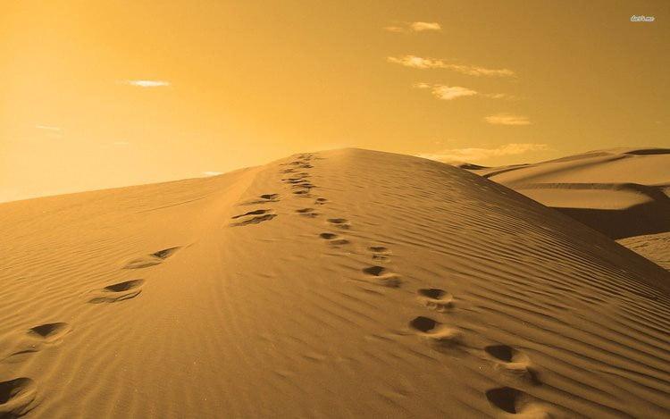 رد پای حیوانات  روش های تهیه آب در بیابان