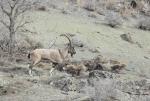 منطقه شکار ممنوع دربند مشکول اردبیل