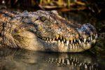 برکه تمساح گاندو