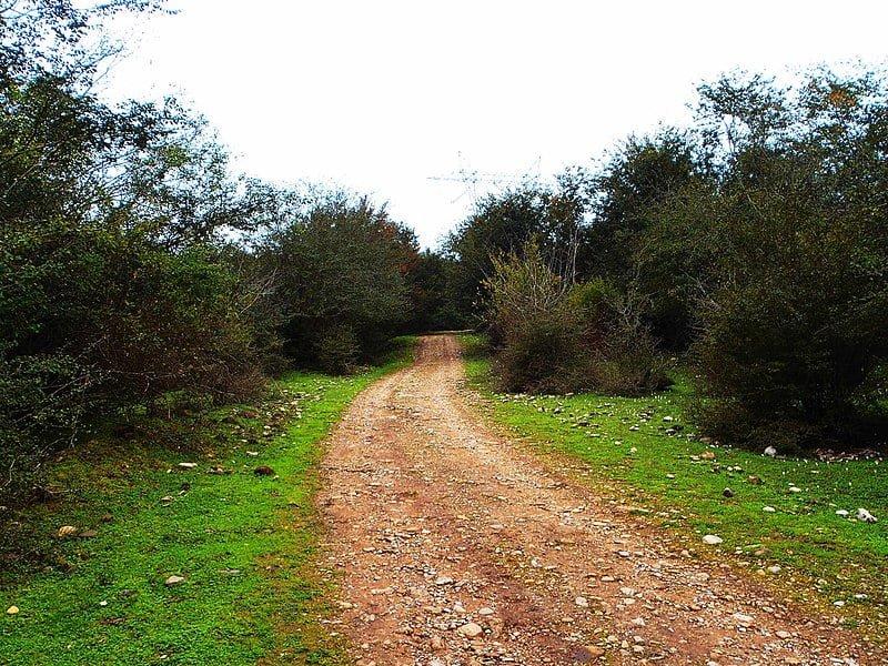 جنگل بلیران جنگل بلیران