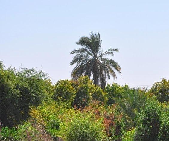 -شیر-علیع2 روستای شیر علی (ع) بهبهان