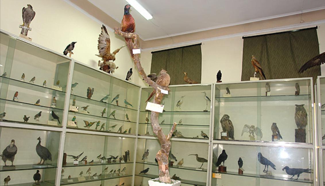 موزه جانورشناسی کرج