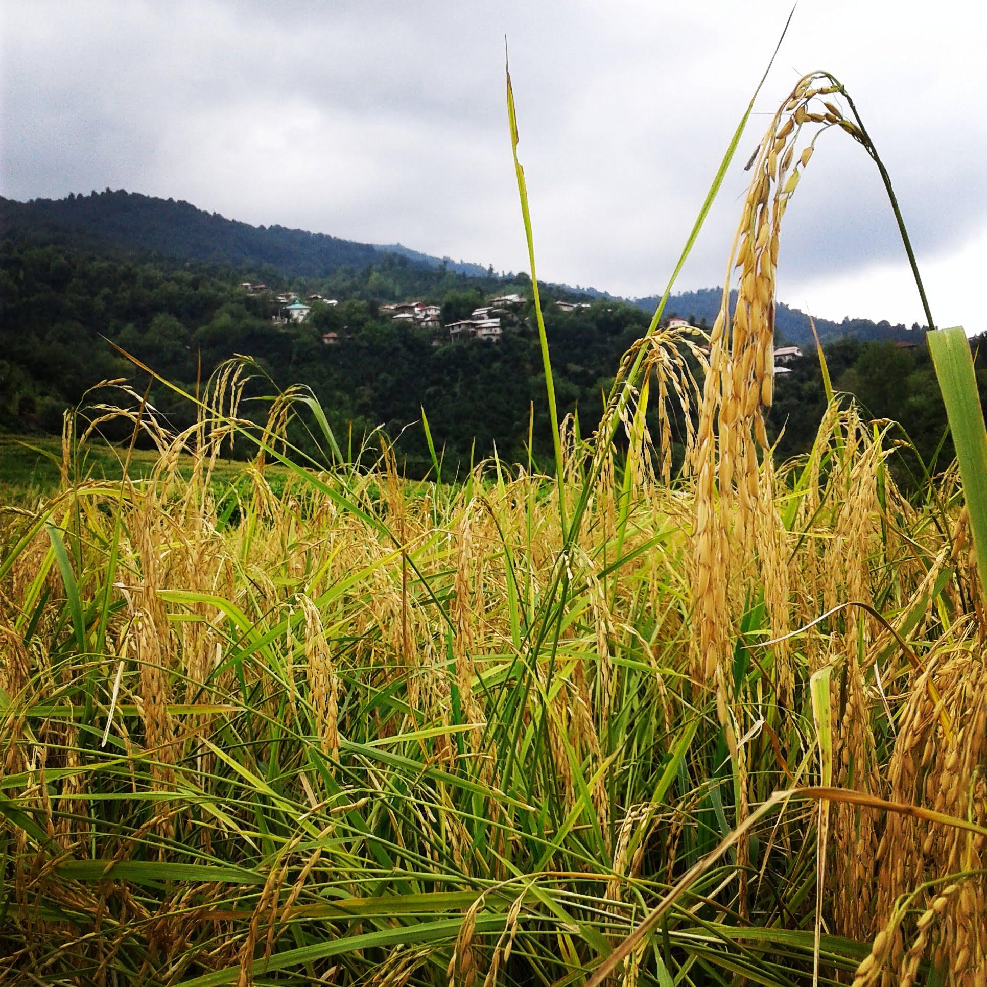روستای کلجار