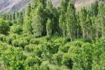 روستای زرین دشت فیروزکوه