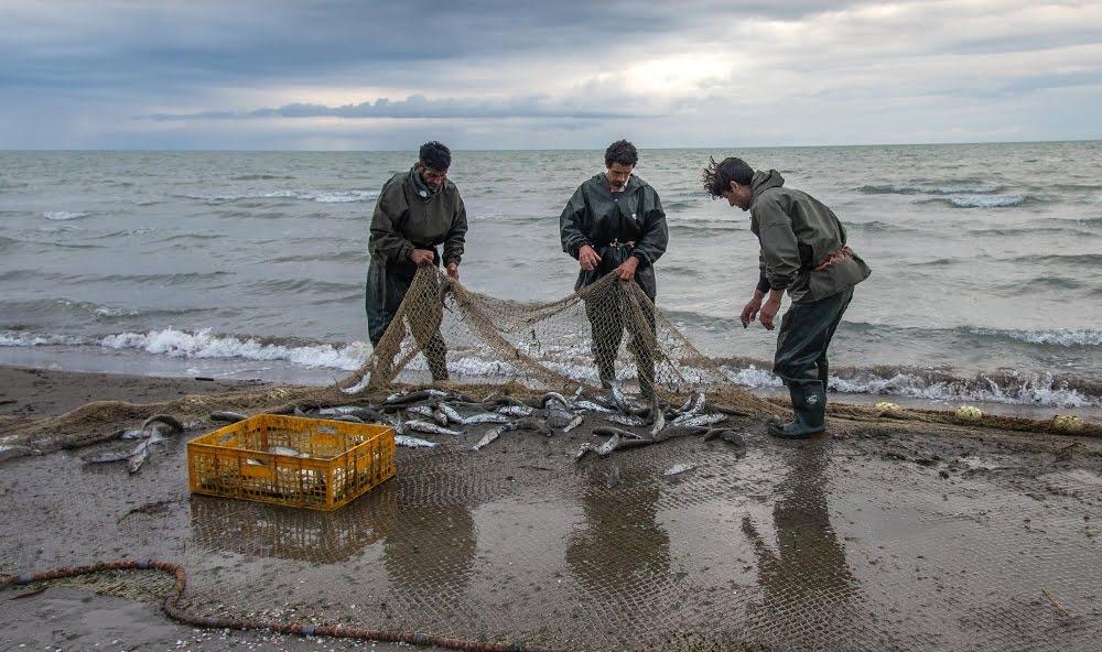 چه فصلی در شمال باید ماهی خرید ؟
