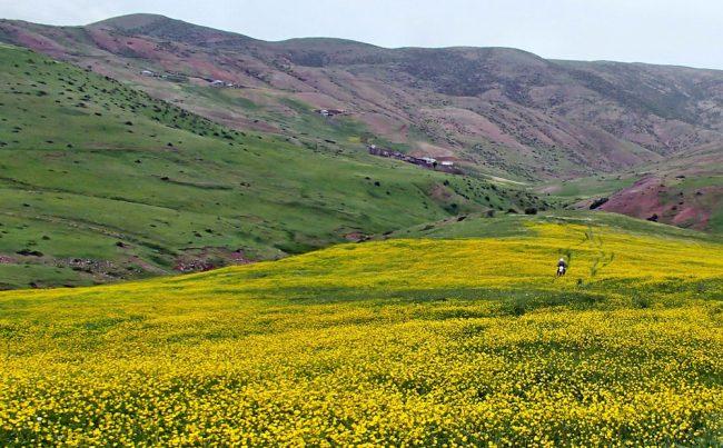 روستای هالیدشت و تصویر زیبا از جاده هالیدشت