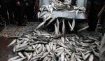 بازار ماهی فروشان دستک