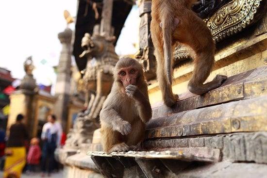 معبد میمون و جهنم تایلند