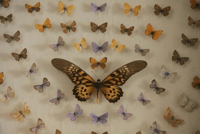 باغ موزه پروانه ها جاهای دیدنی اصفهان (100 جاذبه گردشگری اصفهان)