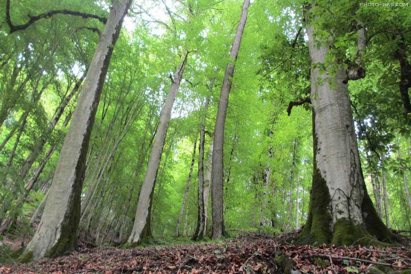 جنگل برار مرزن آباد روستای برار