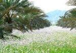 روستای نازدشت رودان