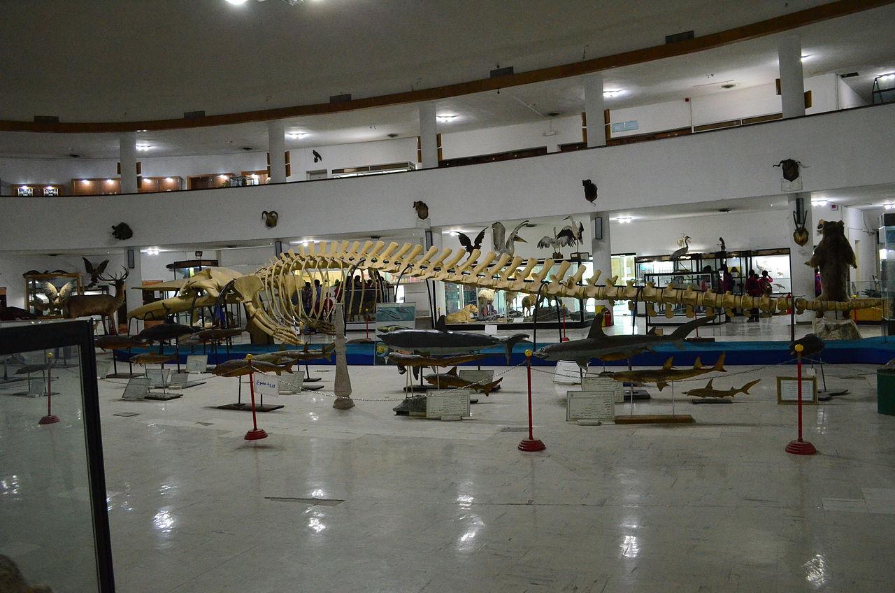 موزه تاریخ طبیعی و تکنولوژی شیراز موزه تاریخ طبیعی و تکنولوژی شیراز
