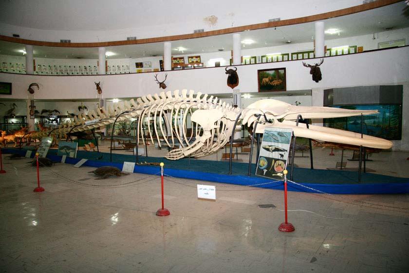 موزه تاریخ طبیعی و تکنولوژی شیراز