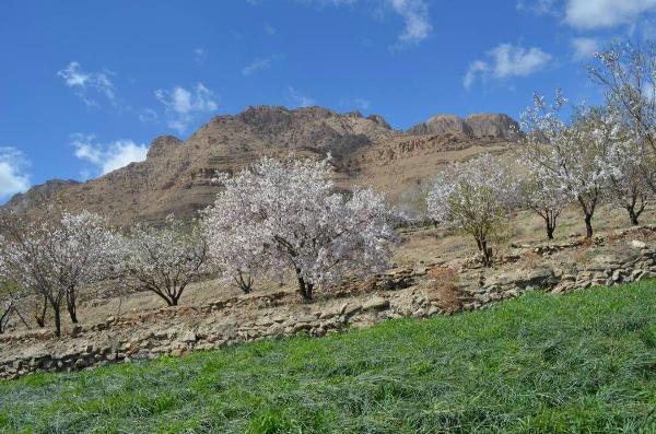 روستای سنگی باجگان بافق