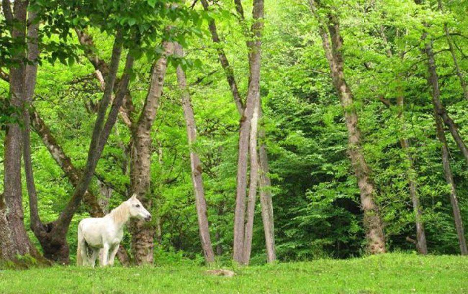 خرگوش دره  پارک های جنگلی تهران - 15 پارک با آدرس و عکس